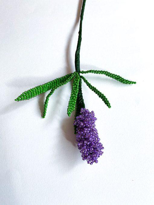 Maj Perle Lilla Hyacint Blomst