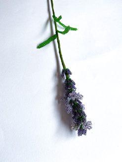 Maj Perle Lavendel Perleblomst